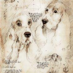 """English Cocker Study"" A full size Da Vinci style drawing"