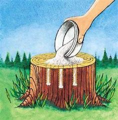 Tree Stump Removal Drill holes in the stump and fill with 100% Epsom salt. Follow with water, and wait. The larger and deeper the drilled holes the better. Six to eight large deep holes should be enough but more will allow more material to penetrate, giving faster results. You can add water or even more epsom salt and water periodically to speed the decomposition process.Live stumps may take as long as a month to decay but then will start to decompose all by themselves.