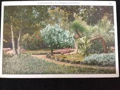 Early 1900s Cactus Garden, Los Angeles, CA postcard