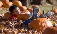 Reading in the pumpkin patch