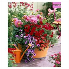 GAP Photos - Garden & Plant Picture Library - Dahlia, Verbena, Petunia Calimero 'Blue Vein' , Calibrachoa 'Dream Kisses' and'Orange Sunset' planted in an orange container on a patio - GAP Photos - Specialising in horticultural photography