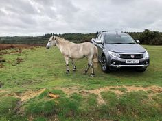 England, Horse, Pickup, Meadow, Landscape #england, #horse, #pickup, #meadow, #landscape