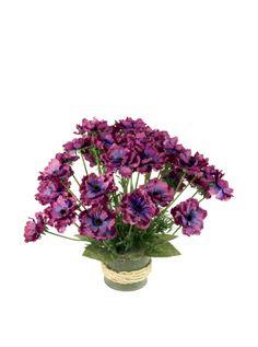 Creative Displays Purple Anemone in Glass at MYHABIT