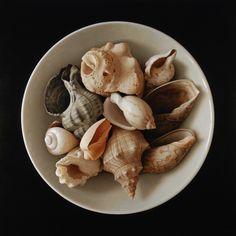Shells on Black  by Antonio Cazorla (oil painting)