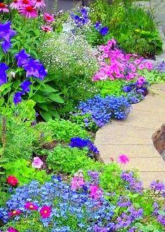 What a cheerful burst of color. flowers & gardens
