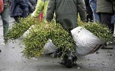 Buyers take home mounds of mistletoe from Tenbury Wells Mistletoe Market Mistletoe Market, Visit Britain, Herefordshire, Wells, Darkness, Cold, Winter, Christmas, Winter Time