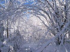 MyNews contributor Natalie Hulan captured this winter photo in Massey, Ont., Monday, March 5, 2012.  http://mynews.ctv.ca