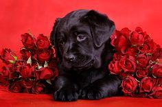 2.14.14 - Valentine Dogs6