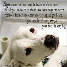 Simply beautiful, it brought a tear to my eye.   #StaffordshireBullTerrier #Staffy