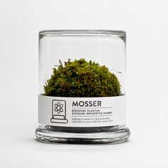 Moss in a glass jar. Perfect with minimalist design for any home office. + It only requires a spritz of water every two weeks.