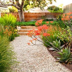 Inner Garden walk. A gravel path edged with succulents leads from the kitchen door and up steps to a meadow of red fescue (additional soil was used to shape the new terrace).