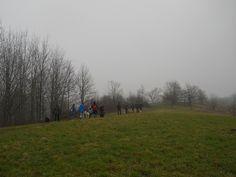 Bellissimo dog walking invernale nella campagna collinare a Fagagna
