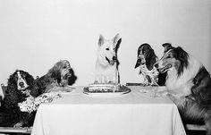 Chronically Vintage: 25 wonderful vintage birthday photos