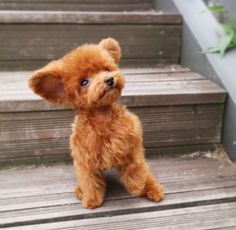 Find Out More On The Poodle Puppies Health Cute Little Puppies, Cute Cats And Dogs, Cute Dogs And Puppies, Baby Dogs, Doggies, Cute Funny Animals, Cute Baby Animals, Animals And Pets, Teacup Puppies
