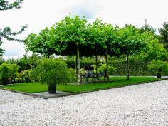 Landelijke tuin met een terras onder dakplatanen en exclusieve potten
