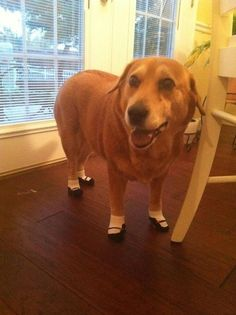 Dogs in toddler socks are hilarious (and actually the socks help protect paws from hot pavement)