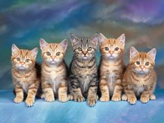 World's Top Most Beautiful Cats Photos Backgrounds Gallery. - Cat And Kitten Images