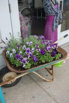 brilliant use of an old wheelbarrow!