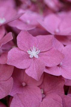 ~~People keep telling me I'm lonely by *Les Hirondelles* Photography - Hydrangea / Ortensia~~