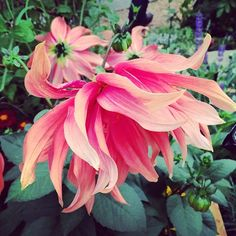 Veranda.com editor Sarah Bray picks her top five flowers from the annual Royal Horticulture Society show in England.