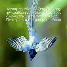 Prayers, Pets, Photography, Animals, Jesus Christ, Photograph, Animales, Animaux, Fotografie