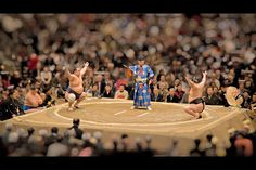 Sumo - from 40 Examples Of Tilt-Shift Photography