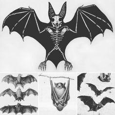 Bat Skeleton, Skeleton Tattoos, Bat Tattoos, Desenho Tattoo, Sternum Tattoo, Creatures Of The Night, Creepy Art, Gothic Art, Future Tattoos
