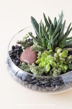 A glass terrarium with succulents -- Gasteria, Sedum and Crassulas with black rock