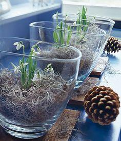Schneeglöckchen im Glas - Dekoideen mit Schneeglöckchen - [LIVING AT HOME]