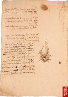 Balances and weights f.33. This double page forms a single sheet containing notes and diagrams relating to balances and weights, with a sketch of a cockleshell in the margin http://www.bl.uk/onlinegallery/ttp/leonardo/accessible/images/page27full.jpg