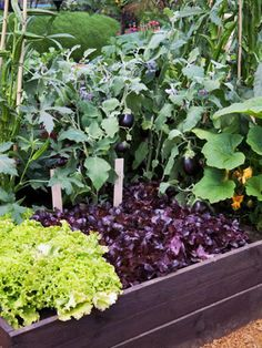 The perfect raised bed is just the thing for summer veggies, herbs, and flowers. A raised bed makes gardening easy. Filled with soil mix, they provide the excellent drainage needed to grow picture perfect vegetables and flowers.