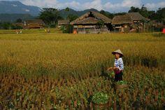 Visite d'un village Tay au pied du massif de Tay Con Linh. Découvrez également la vidéo de notre voyage : https://www.youtube.com/watch?v=WrBLPr_TMns