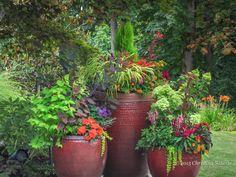 Trio of bright and happy #container #gardens. #Annuals, #perennials, #conifers #FineFoliage