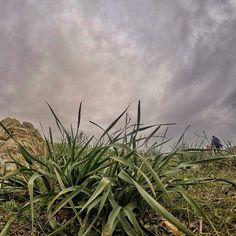 Be #wild and visit #tunisia ♡♡ #wildlifephotography #naturelovers #wildlifephotos #outdoors #nature #roadtrip #instatravel #backpacker #adventures #adventureseekers #landscapeslovers #landscapes #landscape_lovers #green #wildphotography #mountains #gopro4black #goprophotography #gopro4 #wanderlust #wilderness #outdoorswomen