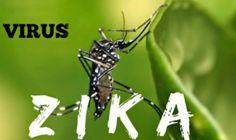 phòng virus Zika bằng cửa lưới chống muỗi