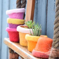 Pot cozy in rainbow colours to keep your succulent plants warm!