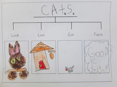In KC, we have been working on animal reports. Here are some of our Thinking Maps this week. Circle Map Can You Guess What I ...