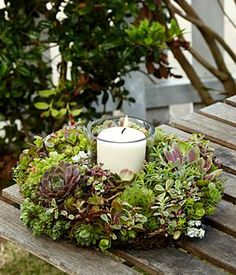 Living Succulent Candle Ring