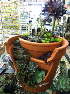 Succulents in broken pot, Designed by Kristin Middleton