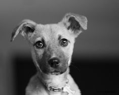 Here's what you need to know before you bring a new puppy home from a shelter.    Dog photography by Emma O'Brien award winning portrait photographer Shelter Puppies, Rescue Puppies, Dogs And Puppies, Dog Photography, Dog Portraits, New Puppy, Photoshoot Ideas, My Images, Labrador Retriever