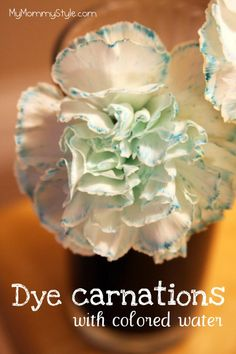 Dyeing carnations with colored water, fun science experiment for kids to learn how plants work. Mymommystyle.com #science #carnations