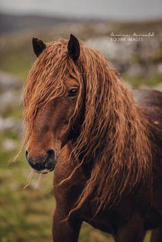 paarden10
