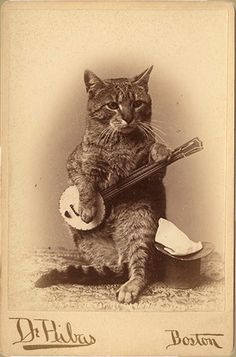 Banjo-strumming serious cat