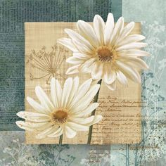 Daisy Flower Field I Absorbent Coasters by Conrad Knutsen, Set of 8 Framed Art Prints, Framed Artwork, Fine Art Prints, Wall Decor Pictures, Print Pictures, Daisy Field, Arte Floral, Art Mural, Illustrations