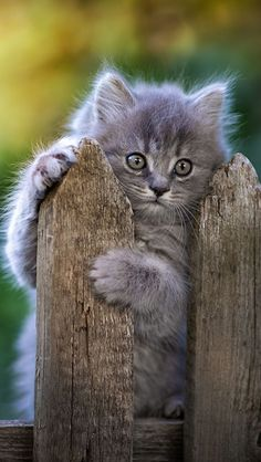 Kittens Cutest Baby, Cute Baby Cats, Kittens And Puppies, Cute Baby Animals, Animals And Pets, Cats And Kittens, Image Chat, Kitten Photos, Cute Creatures