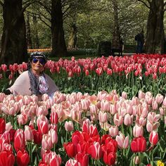 Another beautiful shot from the Tulip Festival in Keukenhof  Holland !! by gina4hasina