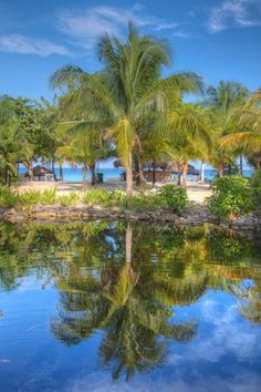 The palm trees at Couples Swept Away | Jamaica