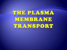 plasma-membrane-transport by Mansoura university via Slideshare