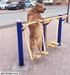 People are just walking by not even paying attention to this swinging standing doggie.......?