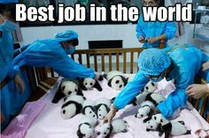 The cutest job you could ever have...